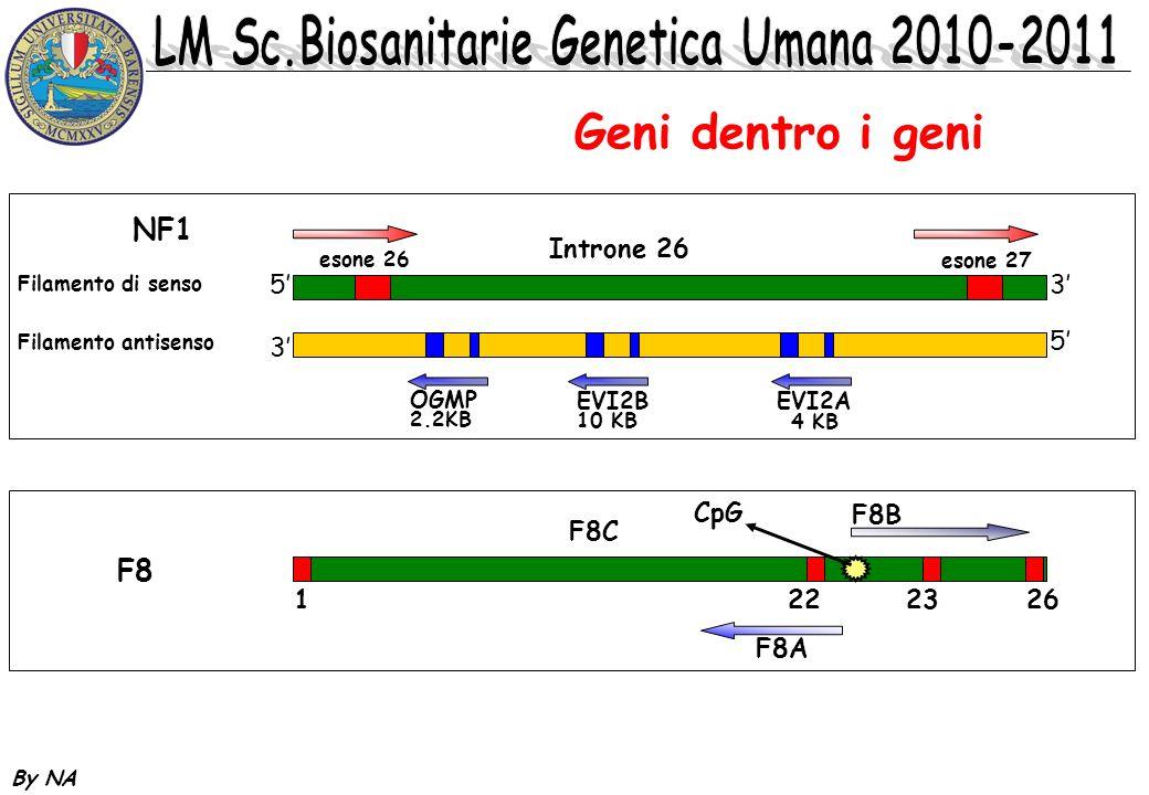 By NA Geni dentro i geni NF1 53 esone 26 esone 27 Introne 26 Filamento di senso Filamento antisenso 3 5 OGMP 2.2KB EVI2B 10 KB EVI2A 4 KB F8 F8B 12223