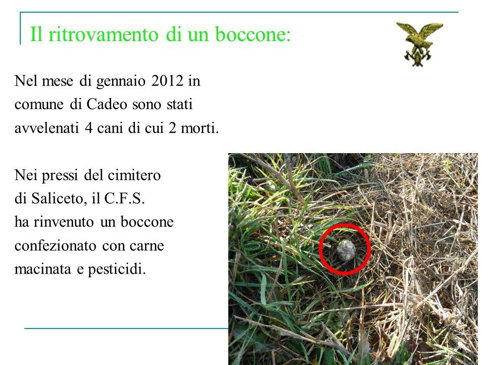 Nel mese di gennaio 2012 in comune di Cadeo sono stati avvelenati 4 cani di cui 2 morti. Nei pressi del cimitero di Saliceto, il C.F.S. ha rinvenuto u
