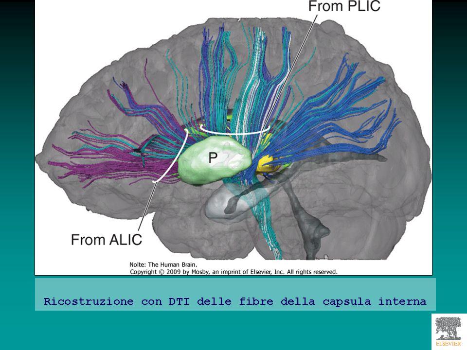 Spect Lattività neuronale viene valutata indirettamente, misurando laumento del flusso ematico nelle aree cerebrali + attive metabolicamente.
