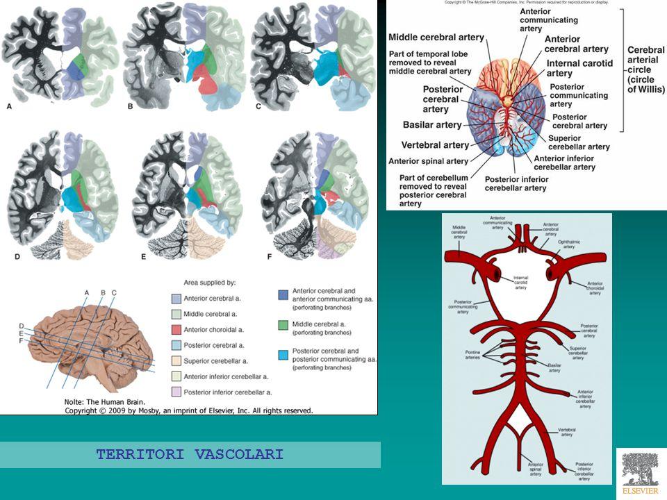 Tecniche angiografiche