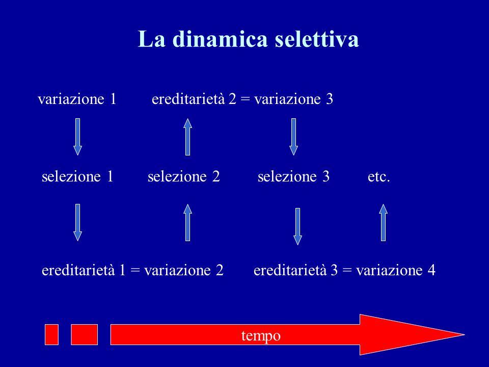 La dinamica selettiva variazione 1 selezione 1 ereditarietà 1 = variazione 2 selezione 2 ereditarietà 2 = variazione 3 selezione 3 ereditarietà 3 = variazione 4 etc.