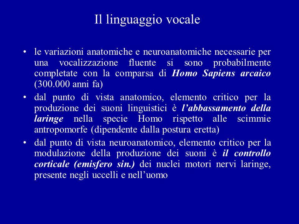 Il linguaggio vocale le variazioni anatomiche e neuroanatomiche necessarie per una vocalizzazione fluente si sono probabilmente completate con la comp