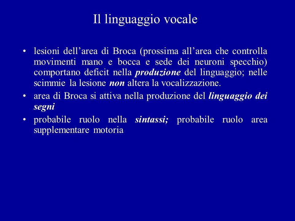 Il linguaggio vocale lesioni dellarea di Broca (prossima allarea che controlla movimenti mano e bocca e sede dei neuroni specchio) comportano deficit
