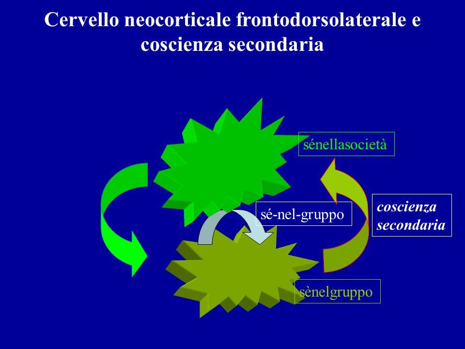 Cervello neocorticale frontodorsolaterale e coscienza secondaria sé-nel-gruppo sènelgruppo sénellasocietà coscienza secondaria