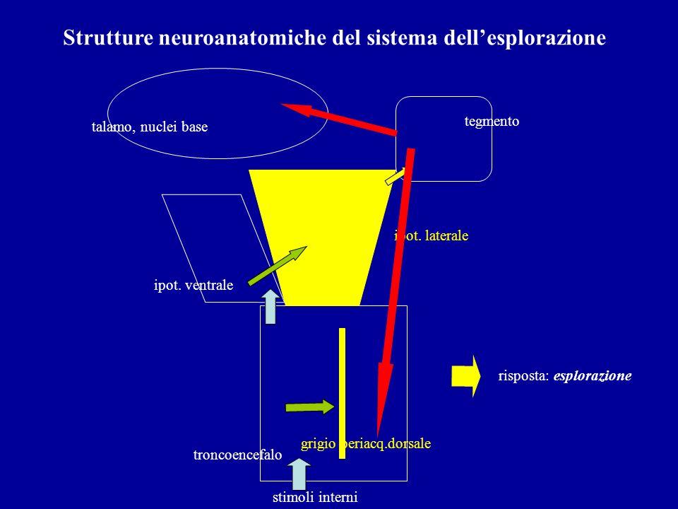 Strutture neuroanatomiche del sistema dellesplorazione troncoencefalo ipot. ventrale ipot. laterale tegmento stimoli interni grigio periacq.dorsale ta