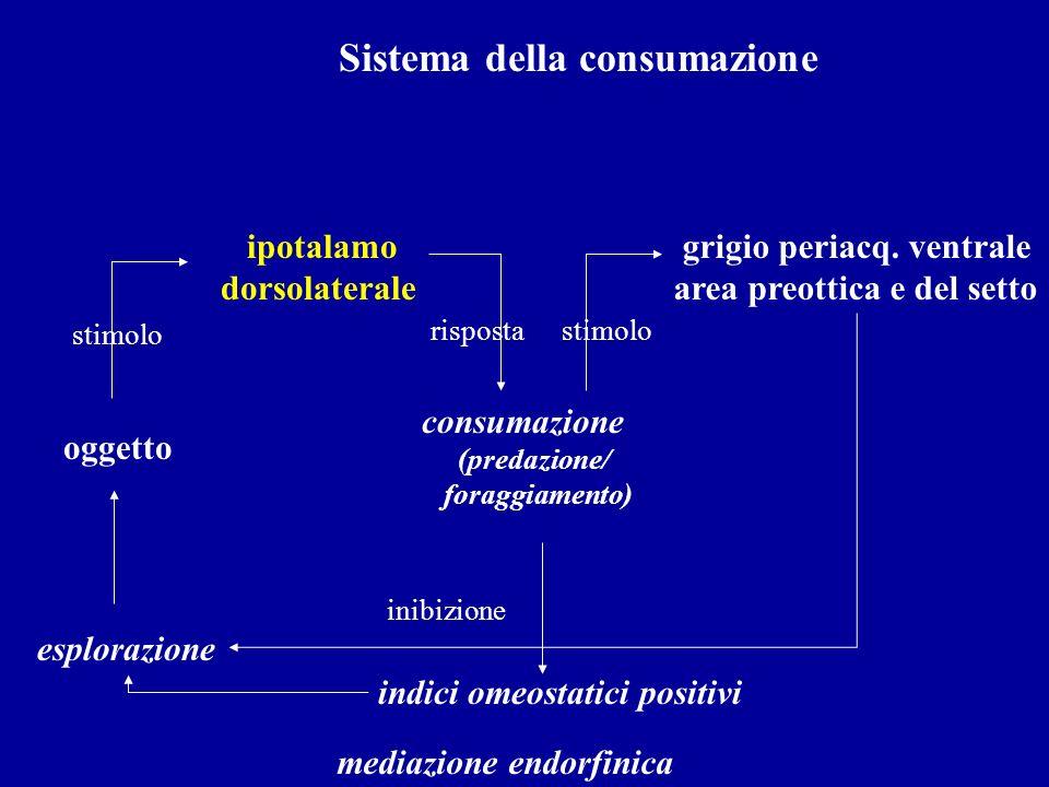 Sistema della consumazione oggetto ipotalamo dorsolaterale consumazione (predazione/ foraggiamento) esplorazione stimolo rispostastimolo grigio periac