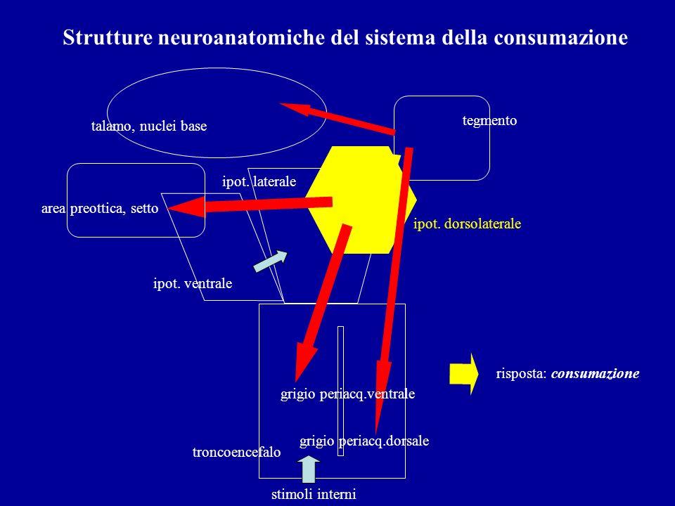 Strutture neuroanatomiche del sistema della consumazione troncoencefalo ipot. ventrale ipot. laterale tegmento stimoli interni grigio periacq.dorsale