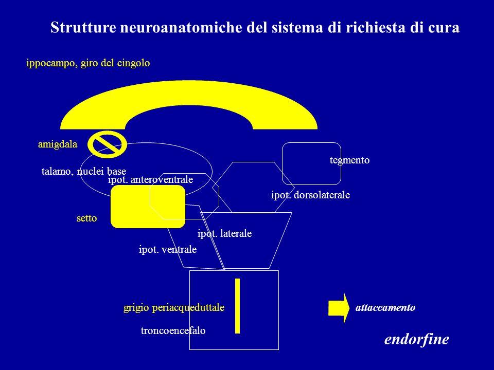 Strutture neuroanatomiche del sistema di richiesta di cura troncoencefalo ipot. ventrale ipot. laterale tegmento talamo, nuclei base attaccamento ipot
