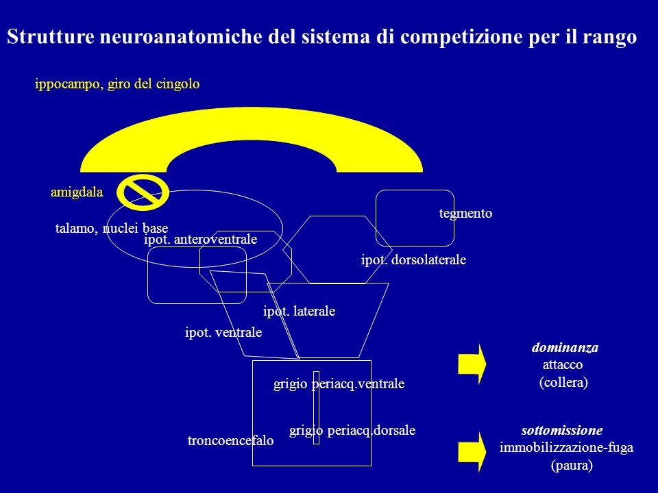 Strutture neuroanatomiche del sistema di competizione per il rango troncoencefalo ipot. ventrale ipot. laterale tegmento grigio periacq.dorsale talamo