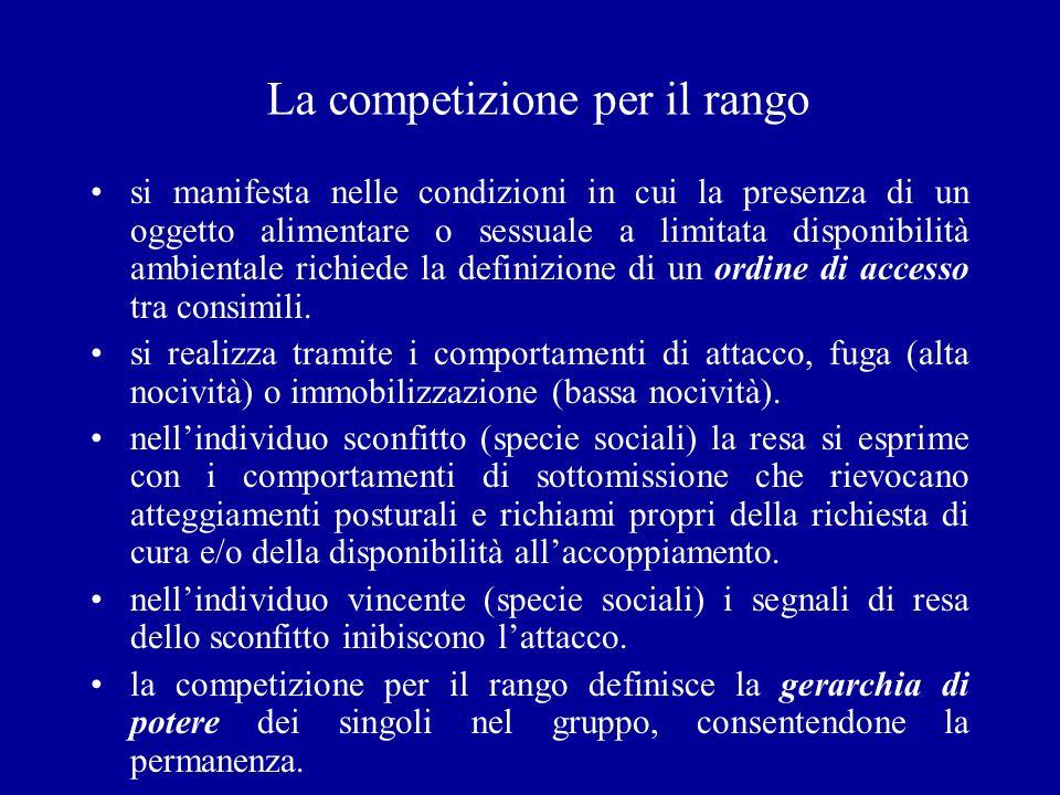 La competizione per il rango si manifesta nelle condizioni in cui la presenza di un oggetto alimentare o sessuale a limitata disponibilità ambientale