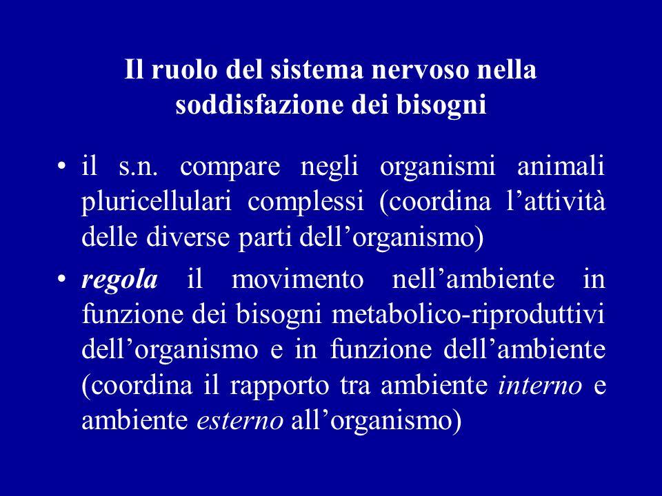 Il ruolo del sistema nervoso nella soddisfazione dei bisogni il s.n. compare negli organismi animali pluricellulari complessi (coordina lattività dell