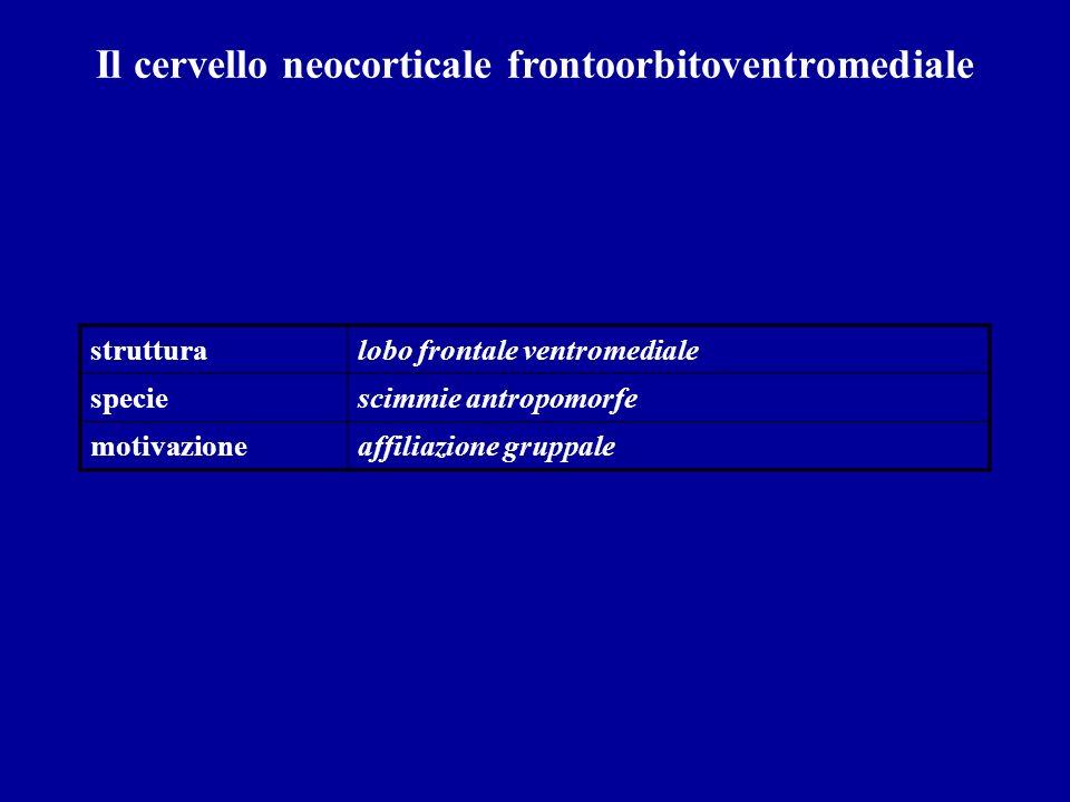 strutturalobo frontale ventromediale speciescimmie antropomorfe motivazioneaffiliazione gruppale