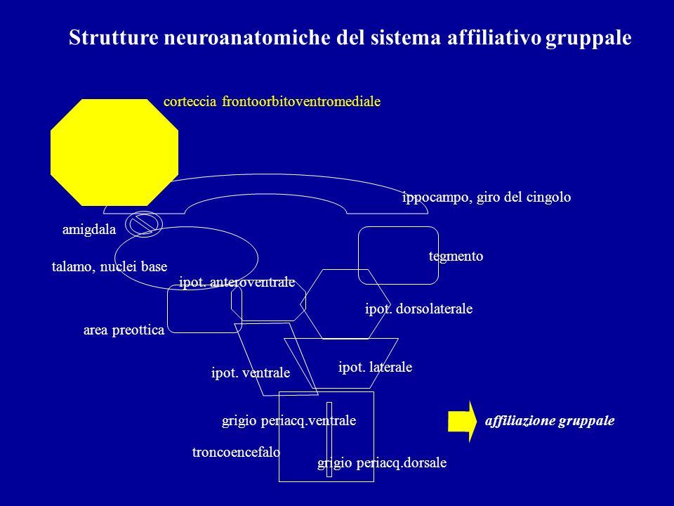 Strutture neuroanatomiche del sistema affiliativo gruppale troncoencefalo ipot. ventrale ipot. laterale tegmento grigio periacq.dorsale talamo, nuclei