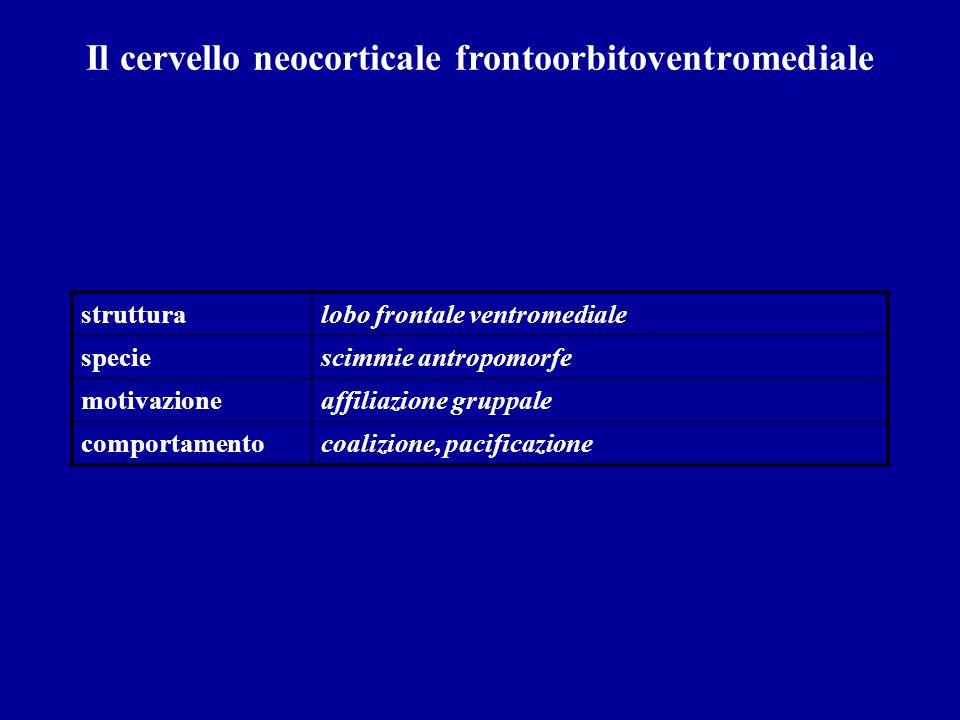 Il cervello neocorticale frontoorbitoventromediale strutturalobo frontale ventromediale speciescimmie antropomorfe motivazioneaffiliazione gruppale co