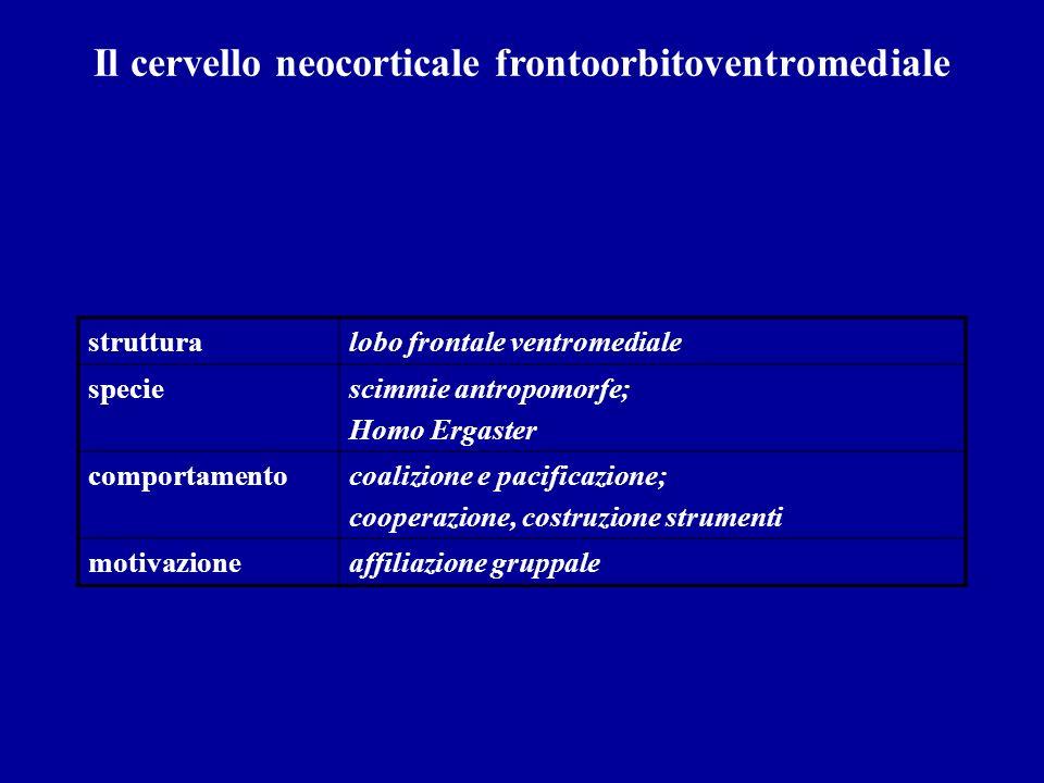 Il cervello neocorticale frontoorbitoventromediale strutturalobo frontale ventromediale speciescimmie antropomorfe; Homo Ergaster comportamentocoalizi