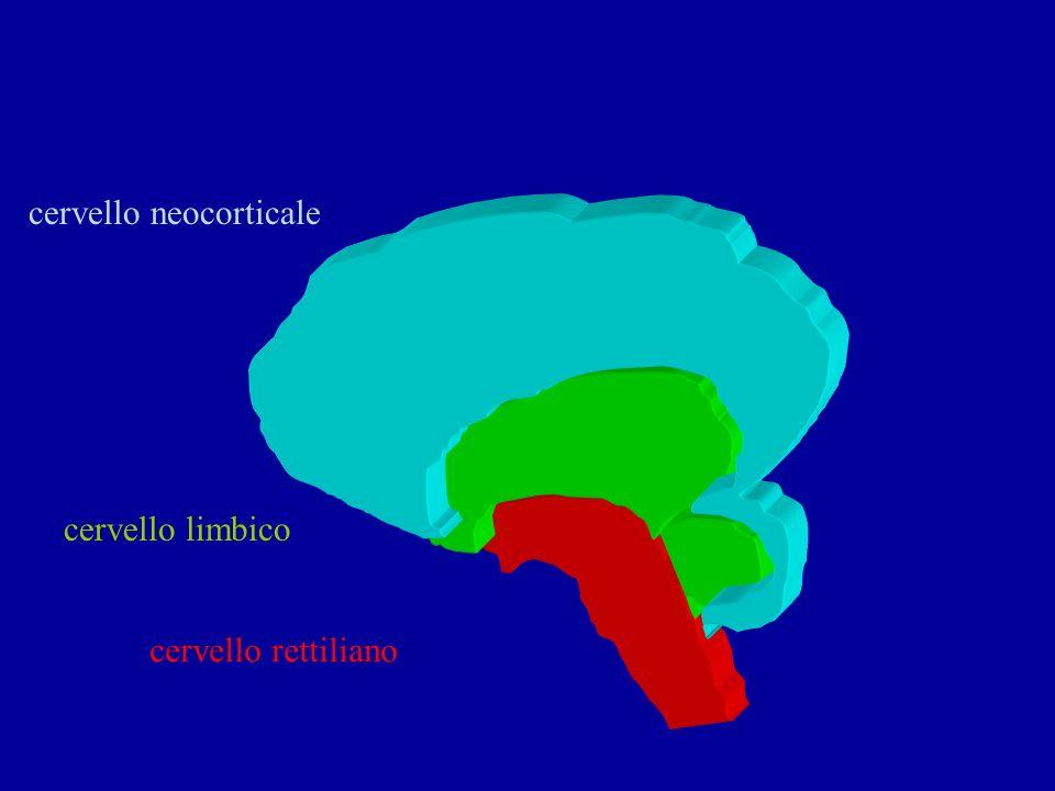 cervello rettiliano cervello limbico cervello neocorticale