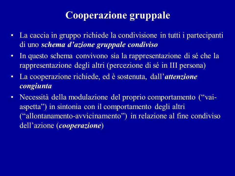 Cooperazione gruppale La caccia in gruppo richiede la condivisione in tutti i partecipanti di uno schema dazione gruppale condiviso In questo schema c