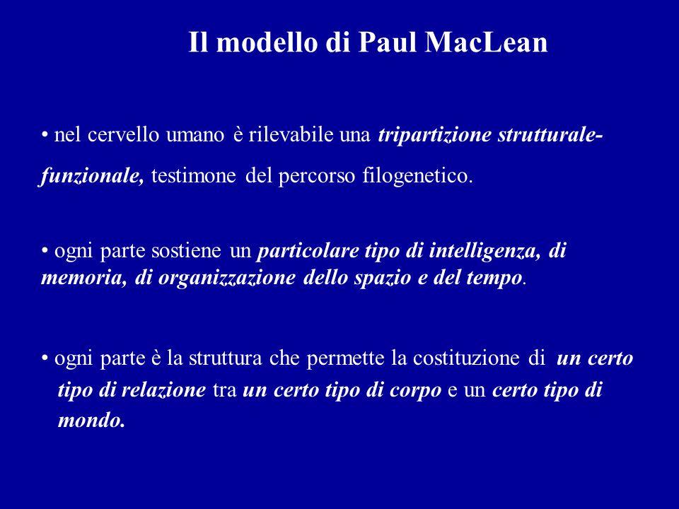 Il modello di Paul MacLean nel cervello umano è rilevabile una tripartizione strutturale- funzionale, testimone del percorso filogenetico. ogni parte