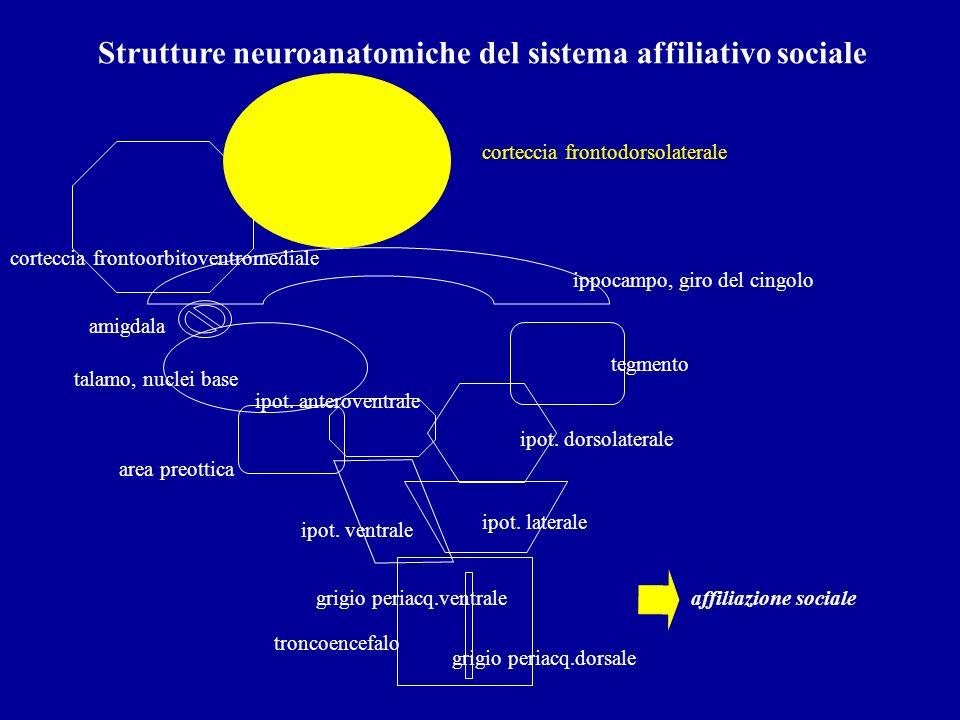 Strutture neuroanatomiche del sistema affiliativo sociale troncoencefalo ipot. ventrale ipot. laterale tegmento grigio periacq.dorsale talamo, nuclei