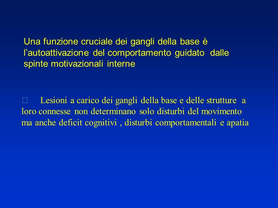  Lesioni a carico dei gangli della base e delle strutture a loro connesse non determinano solo disturbi del movimento ma anche deficit cognitivi, dis
