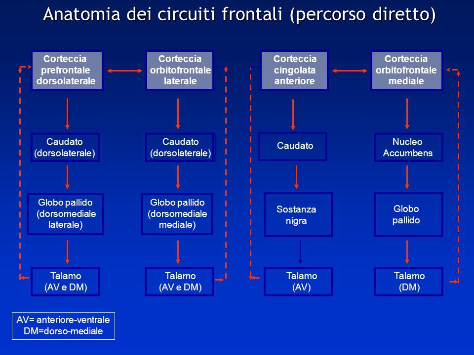 Anatomia dei circuiti frontali (percorso diretto) Corteccia prefrontale dorsolaterale Corteccia orbitofrontale laterale Corteccia cingolata anteriore