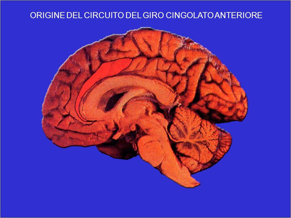 ORIGINE DEL CIRCUITO DEL GIRO CINGOLATO ANTERIORE