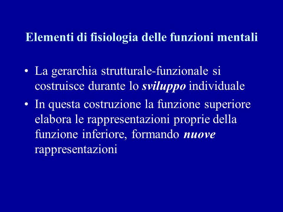Elementi di fisiologia delle funzioni mentali La gerarchia strutturale-funzionale si costruisce durante lo sviluppo individuale In questa costruzione