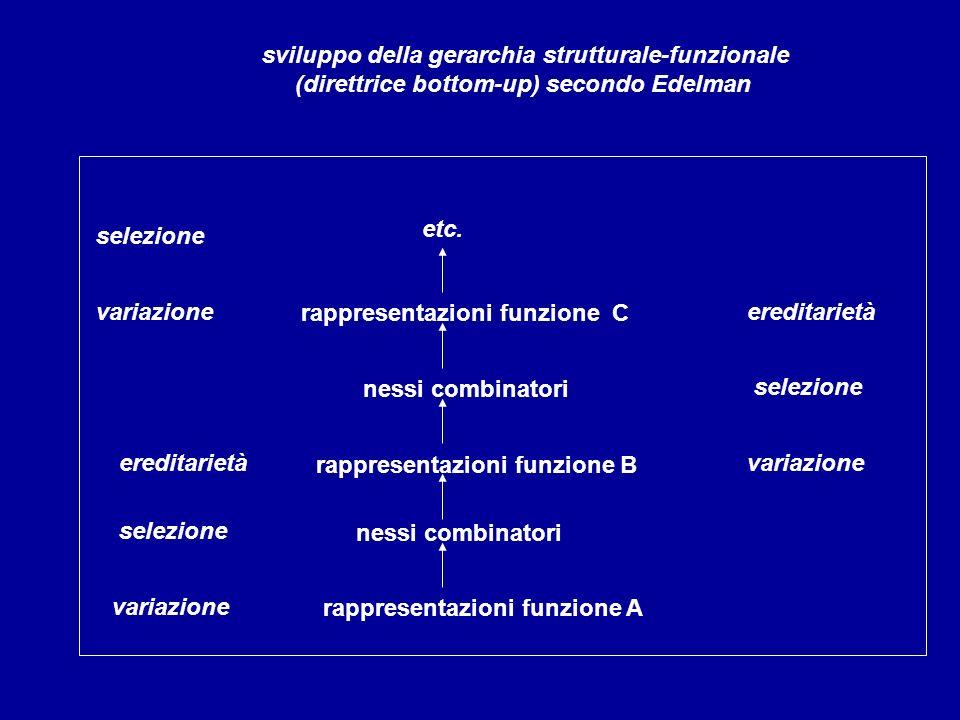 rappresentazioni funzione C variazione sviluppo della gerarchia strutturale-funzionale (direttrice bottom-up) secondo Edelman selezione ereditarietà n