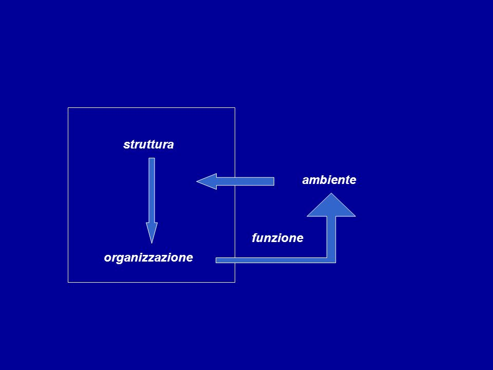 struttura organizzazione ambiente funzione