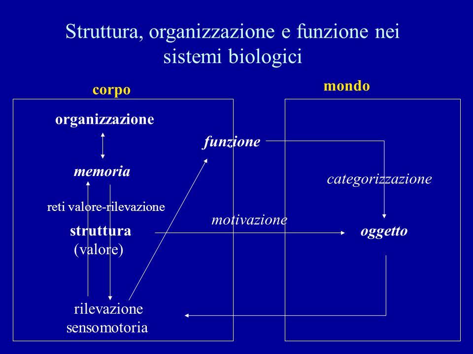 Struttura, organizzazione e funzione nei sistemi biologici struttura (valore) oggetto rilevazione sensomotoria memoria corpo mondo motivazione reti va