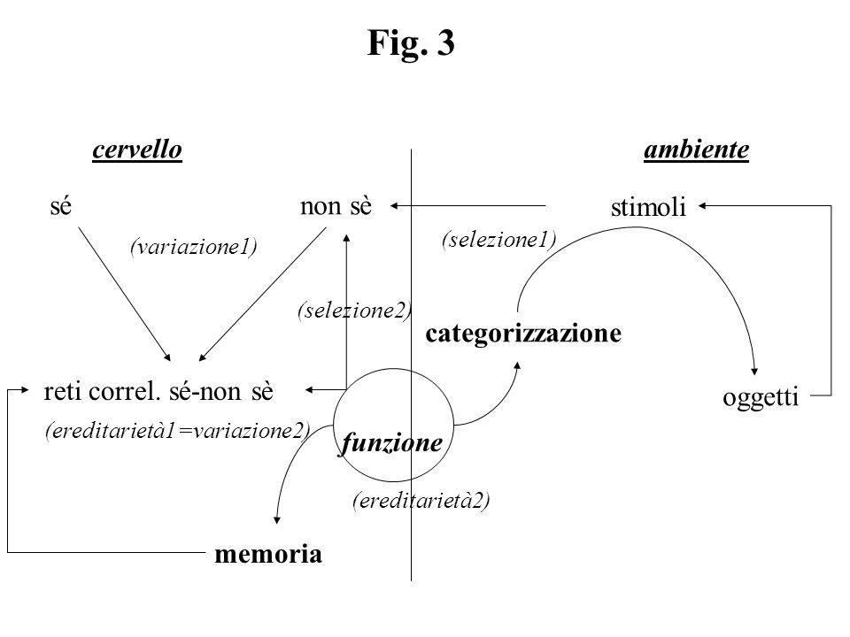 Fig. 3 cervello ambiente sé non sè stimoli (variazione1) (selezione1) reti correl. sé-non sè (ereditarietà1=variazione2) (selezione2) categorizzazione