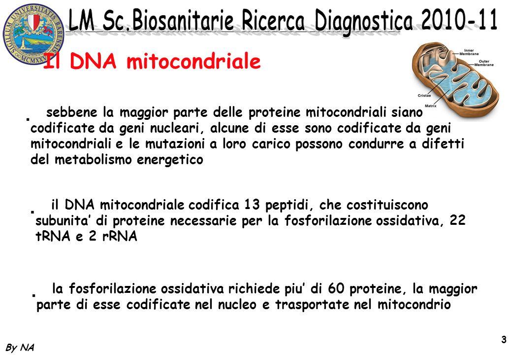 By NA 3 * sebbene la maggior parte delle proteine mitocondriali siano codificate da geni nucleari, alcune di esse sono codificate da geni mitocondrial