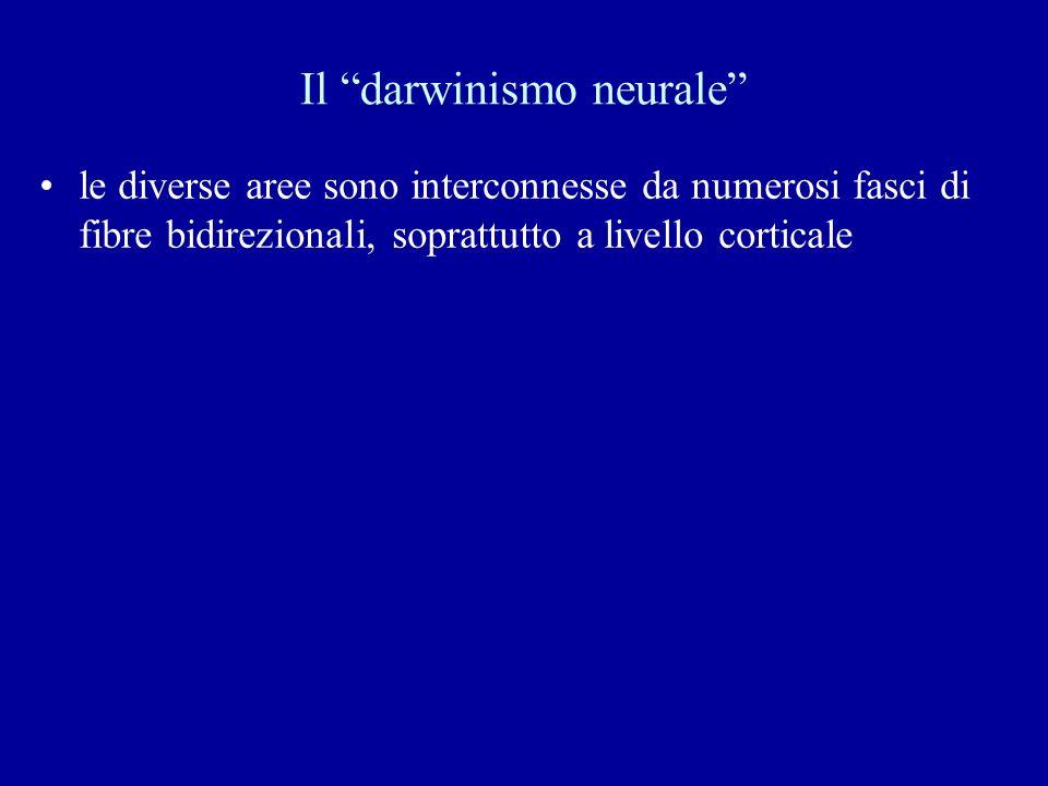 Il darwinismo neurale le diverse aree sono interconnesse da numerosi fasci di fibre bidirezionali, soprattutto a livello corticale