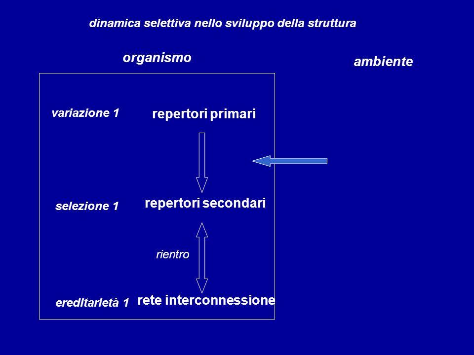 repertori primari variazione 1 organismo ambiente dinamica selettiva nello sviluppo della struttura selezione 1 repertori secondari ereditarietà 1 ret
