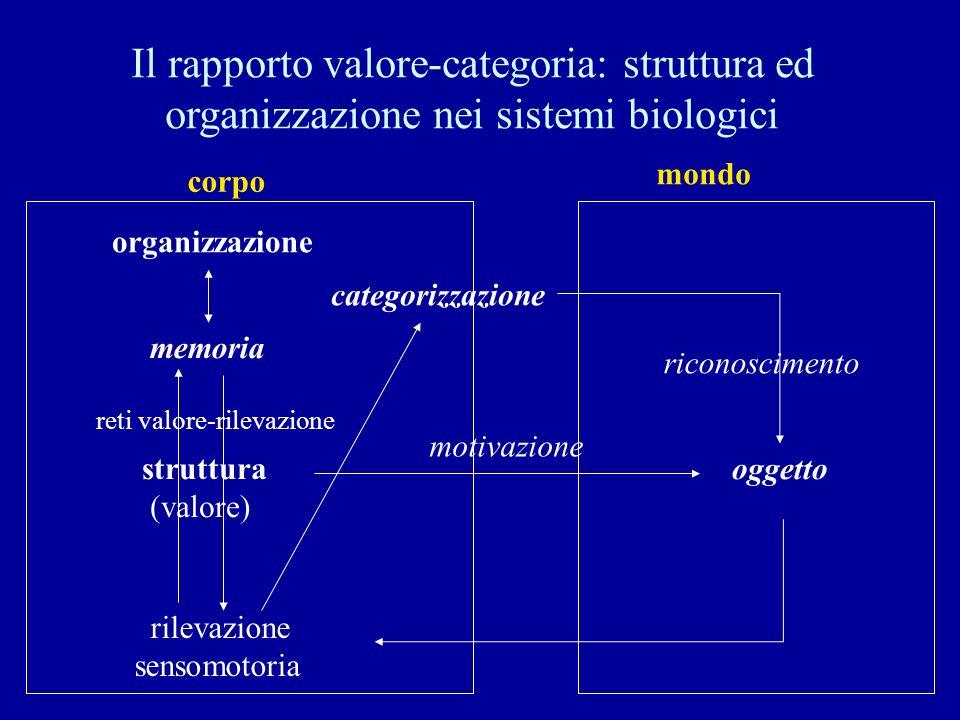Il rapporto valore-categoria: struttura ed organizzazione nei sistemi biologici struttura (valore) oggetto rilevazione sensomotoria memoria corpo mond