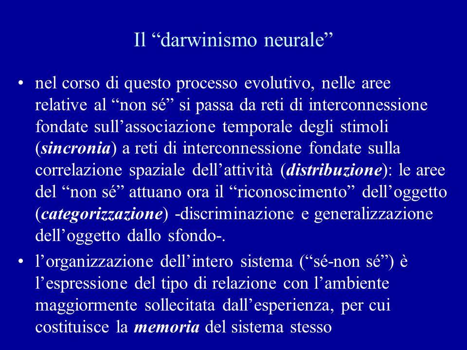 Il darwinismo neurale nel corso di questo processo evolutivo, nelle aree relative al non sé si passa da reti di interconnessione fondate sullassociazi
