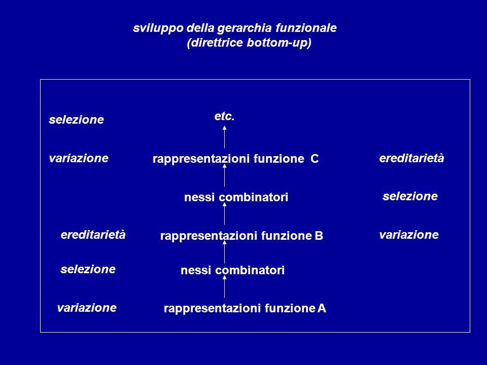 rappresentazioni funzione C variazione sviluppo della gerarchia funzionale (direttrice bottom-up) selezione ereditarietà nessi combinatori rappresenta