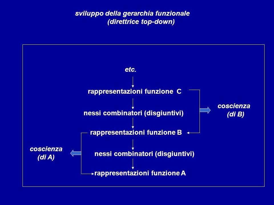 rappresentazioni funzione C sviluppo della gerarchia funzionale (direttrice top-down) nessi combinatori (disgiuntivi) rappresentazioni funzione B cosc