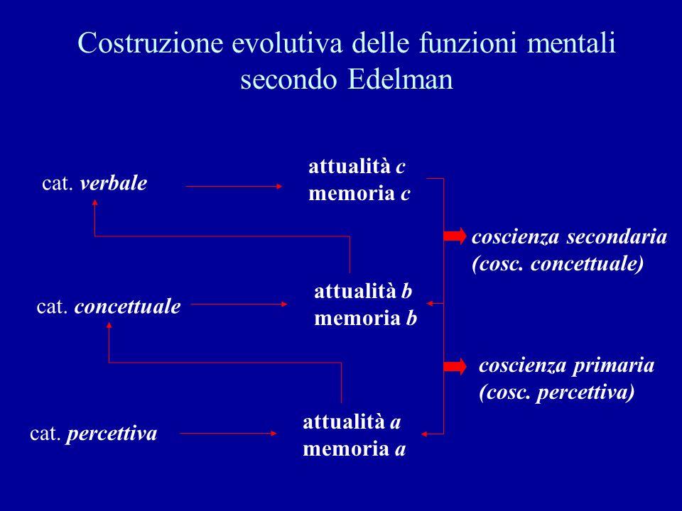 Costruzione evolutiva delle funzioni mentali secondo Edelman cat. percettiva cat. concettuale cat. verbale attualità a memoria a attualità b memoria b