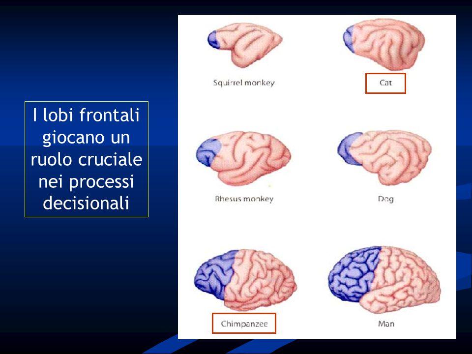 I circuiti fronto-subcorticali rappresentano un sistema preposto allorganizzazione rapporti cervello-comportamento dei rapporti cervello-comportamento La sregolazione dei circuiti che originano dalla corteccia frontale è alla base di una grande varietà di disturbi cognitivi e neuropsichiatrici