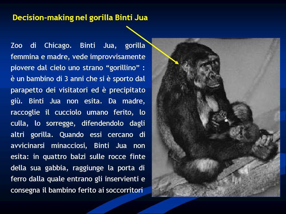 Zoo di Chicago. Binti Jua, gorilla femmina e madre, vede improvvisamente piovere dal cielo uno strano gorillino : è un bambino di 3 anni che si è spor
