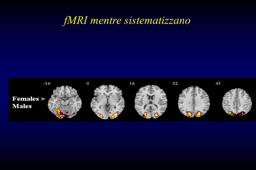 fMRI mentre sistematizzano