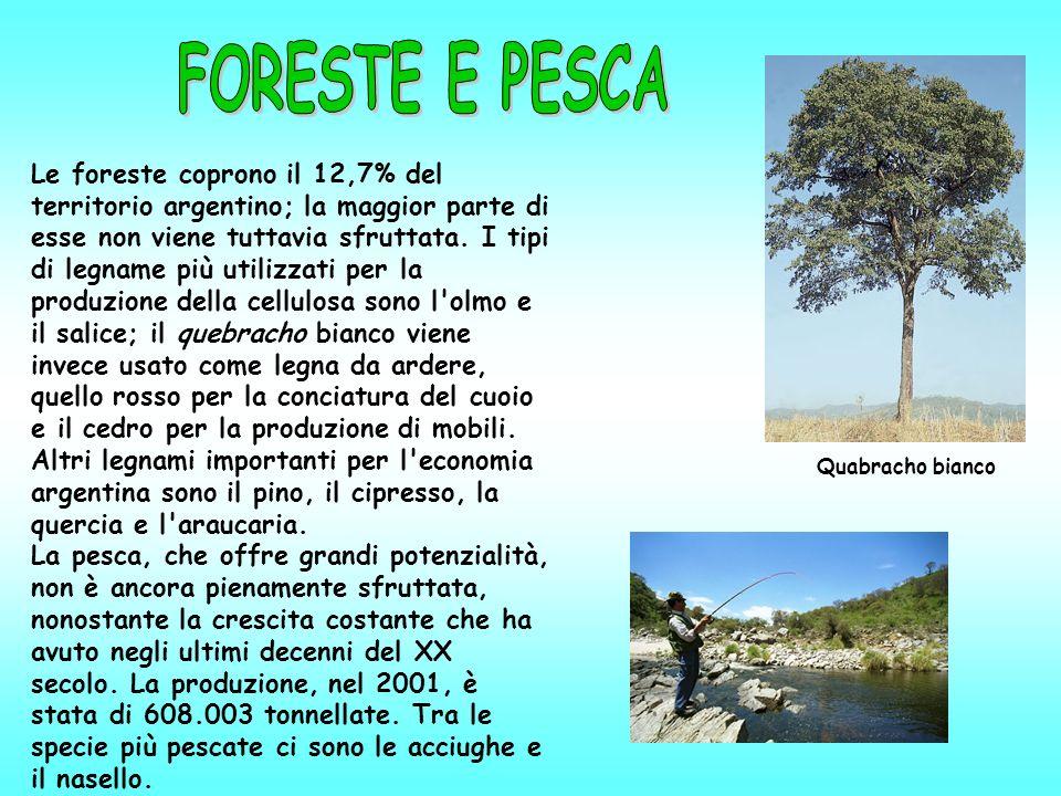 Le foreste coprono il 12,7% del territorio argentino; la maggior parte di esse non viene tuttavia sfruttata. I tipi di legname più utilizzati per la p