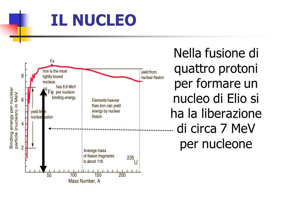 IL NUCLEO Nella fusione di quattro protoni per formare un nucleo di Elio si ha la liberazione di circa 7 MeV per nucleone