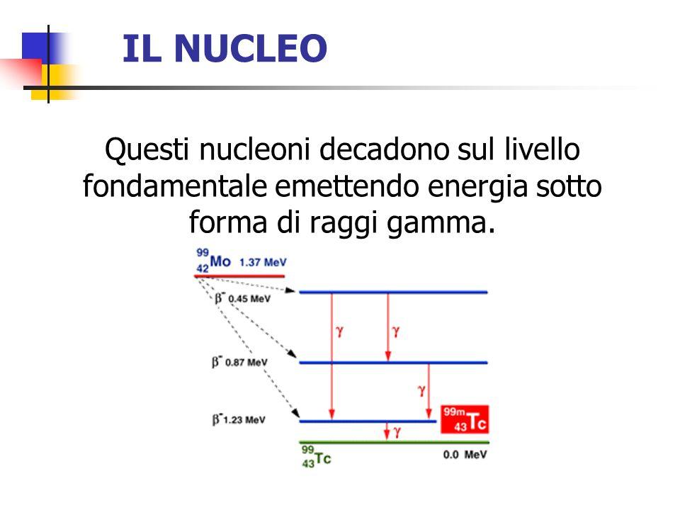 IL NUCLEO Questi nucleoni decadono sul livello fondamentale emettendo energia sotto forma di raggi gamma.