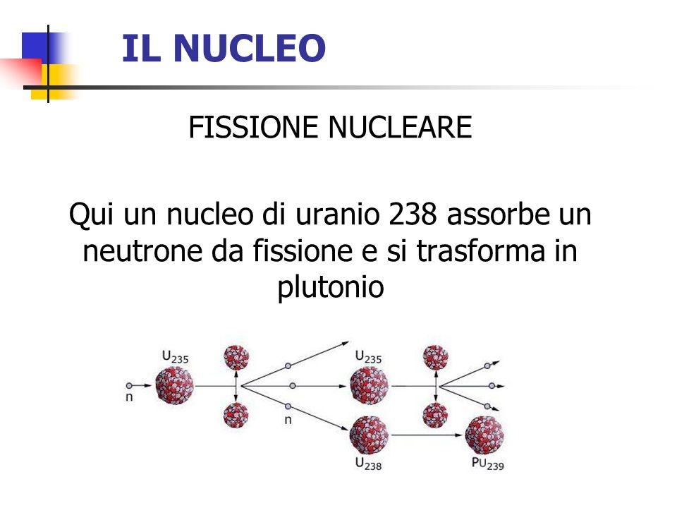 IL NUCLEO FISSIONE NUCLEARE Qui un nucleo di uranio 238 assorbe un neutrone da fissione e si trasforma in plutonio