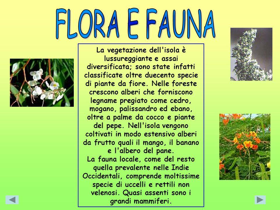 La vegetazione dell'isola è lussureggiante e assai diversificata; sono state infatti classificate oltre duecento specie di piante da fiore. Nelle fore