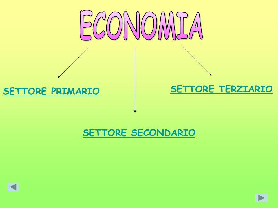 SETTORE PRIMARIO SETTORE TERZIARIO SETTORE SECONDARIO