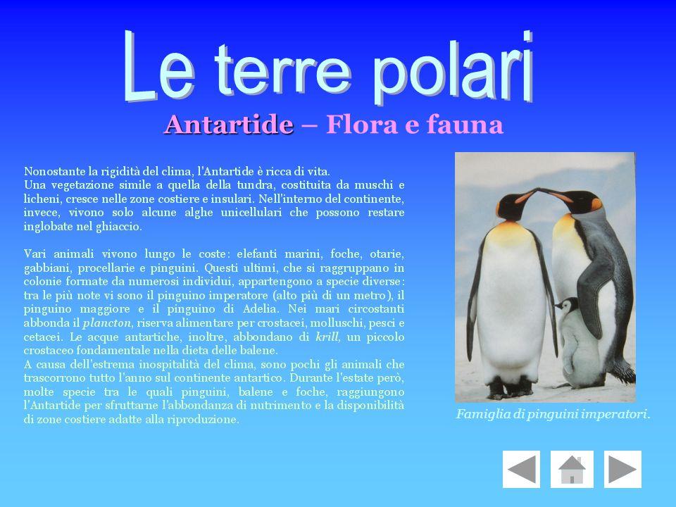 Antartide Antartide – Flora e fauna Famiglia di pinguini imperatori.