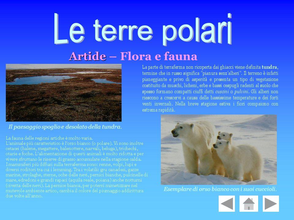 Artide Artide – Flora e fauna Esemplare di orso bianco con i suoi cuccioli. Il paesaggio spoglio e desolato della tundra.